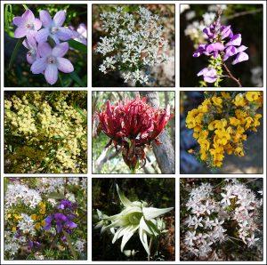 Wildflower walk 01Sep16 collage