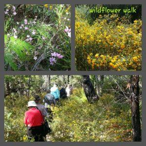 Wildflower walk 01Sep16